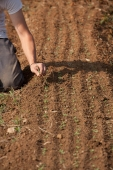 A farmer tends the land, removing weeds that hinder the growth of new crops.