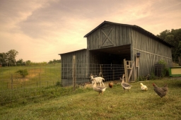 The Mt Laurel Farm raises range-free chickens, geese, goats, and other animals.