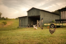 This rustic barn houses chickens, goats, and other animals on the Mt Laurel Farm.